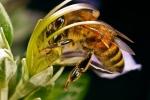 Сможет ли человечество выжить после гибели пчел?