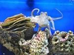 Украинский осьминог Павлик