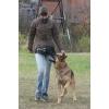 Домодедово дрессировка собак