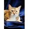 Кошка - домашняя помощница в добрые руки