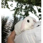 Продажа карликовых крольчат для дома