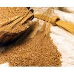 Продаем пшеницу,  кукурузу.  ячмень.  сельхозкультуры