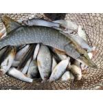 Активатор клёва.  Гораздо больше рыбы с рыбалки.