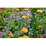 Декоративные растения:  цветы,  кустарники