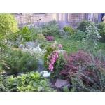 Купить цветы,  газон,  растения - широкий выбор